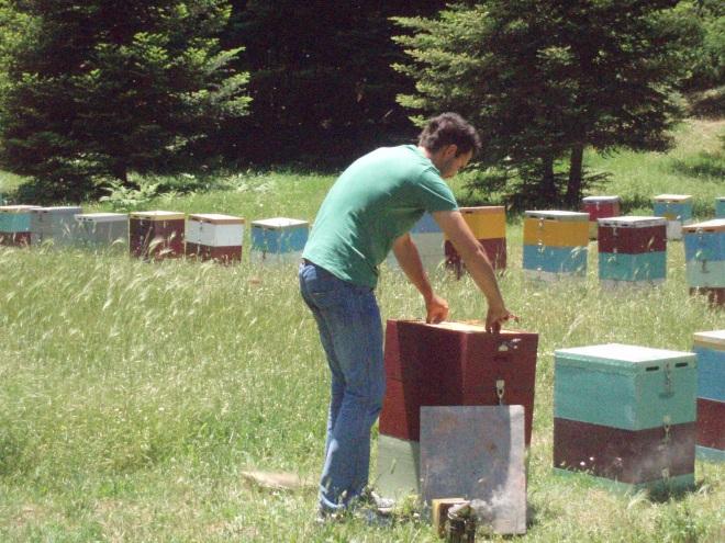 Έλεγχος ενός μελισσοκομείου μας στην Βυτίνα Αρκαδίας.