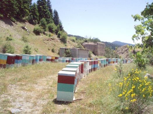 Μελισσοκομείο μας στην Καρκαλού Αρκαδίας (2008).