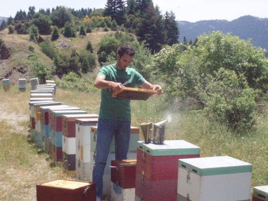Έλεγχος ενός μελισσοκομείου μας στην Καρκαλού Αρκαδίας.