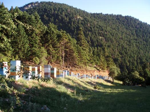 Τα καμάρια μας! Οι πύργοι μας στα ελατόφυτα βουνά της Πελοποννήσου!