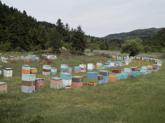Το μελισσοκομείο μας στο Μαίναλο ... τη μάνα της ελατοβανίλιας !