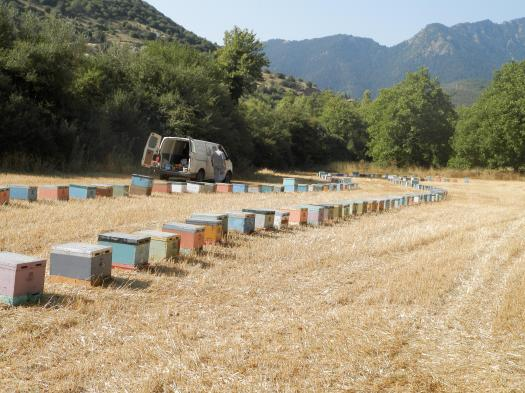 Ένα από τα μελισσοκομεία μας σε δάσος βελανιδιάς.