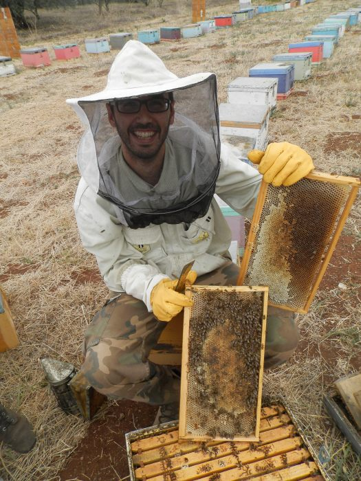 Τρύγος μελισσοκομείου στα πεύκα (Σεπ.2013)!