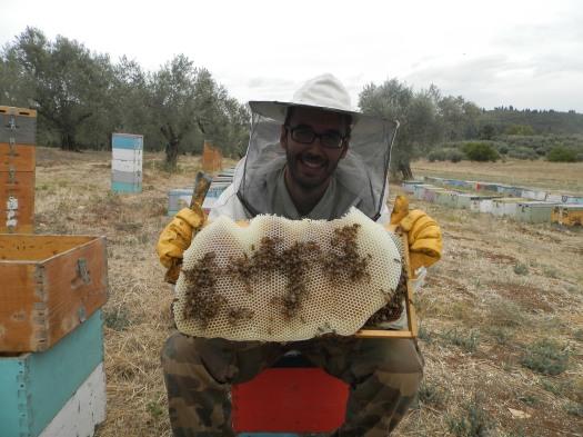 Τρύγος μελισσοκομείου στα πεύκα(Σεπ.2013)!