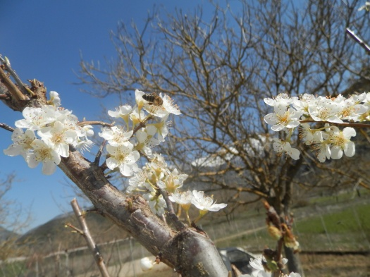 Εργασία σε άνθη βανίλιας!